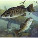 smallmouth-bass-fishes-underwater-micropterus-dolomieu.jpg.662x0_q70_crop-scale